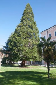 2_sequoia della california